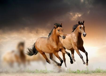 两匹奔跑的骏马4K高端电脑桌面壁纸