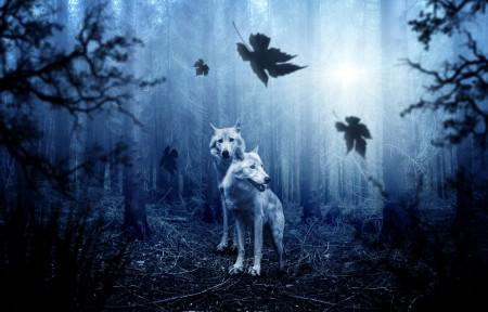 狼,森林,晚上,4k高端电脑桌面壁纸
