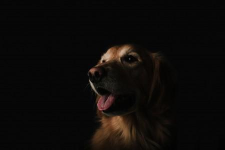 可爱的狗狗5K高端电脑桌面壁纸