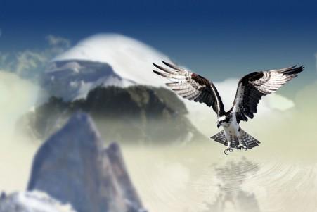 白尾鹰 山 天空 云 水 空气 4K高端电脑桌面壁纸
