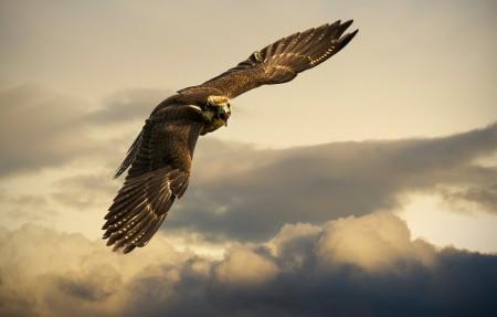 天空中翱翔的老鹰4k高端电脑桌面壁纸