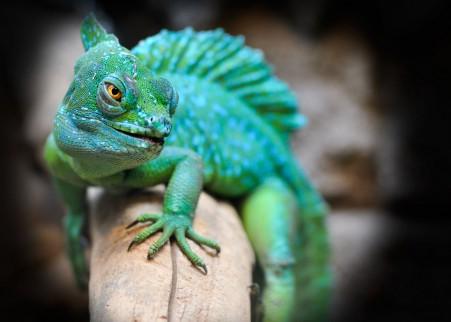 爬行动物 绿色 蜥蜴 4K高端电脑桌面壁纸