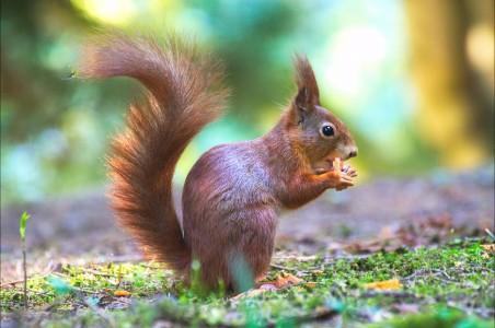 可爱 森林 野生动物摄影 松鼠4K高端电脑桌面壁纸