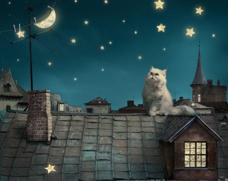 波斯白猫,小猫,童话,幻想,晚上屋顶,房子,天空图片