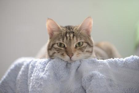 猫的摄影4k图片