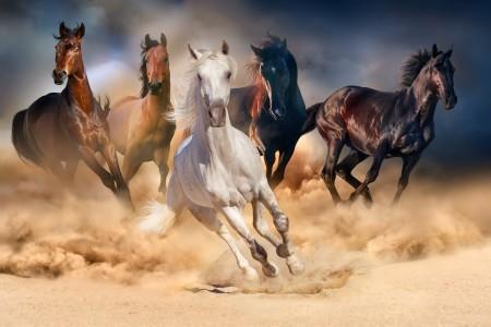 沙场上奔跑的五匹骏马高清图片