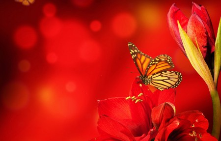 蝴蝶红色鲜花背景4K高端电脑桌面壁纸