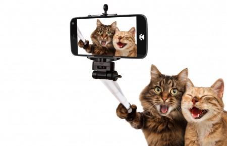 猫,聪明的猫,自拍的可爱照片 6K高端电脑桌面壁纸
