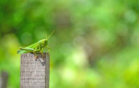 麦田 绿草地 蚂蚱5k图片