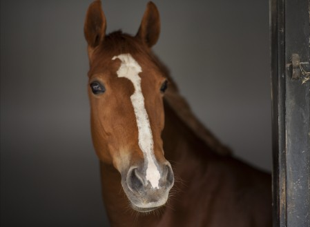马 美丽 眼睛 纯种马 鼻子 4K动物高端电脑桌面壁纸