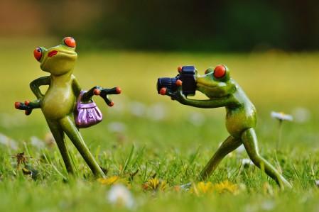青蛙 摄影师 可爱 有趣 4K高端电脑桌面壁纸
