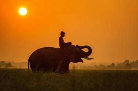 非洲 非洲人 大象 动物 麦田 4K图片