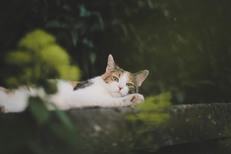 猫猫,躺着,看着你,小胡子,小脚,图片