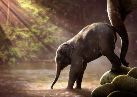 象 年轻的大象 大象 动物 大象4K高端电脑桌面壁纸