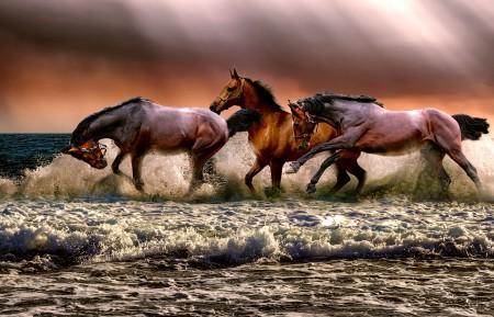 海边 海水 海滩 三匹马5k图片