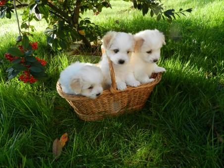绿草地 篮子 三只可爱小狗4k高端电脑桌面壁纸