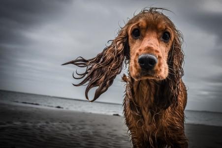 海边的酷狗4k图片