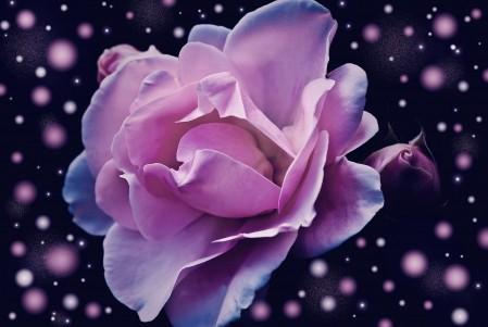 粉红色玫瑰花 幻想 梦幻 4K超高清壁纸精选