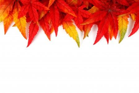 秋天 红叶 叶子 5K背景图片