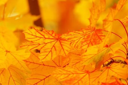 秋天 背景 颜色 秋天 叶子 枫叶 自然 5K超高清壁纸精选