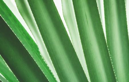 热带植物特写 简约背景3440x1440高端电脑桌面壁纸