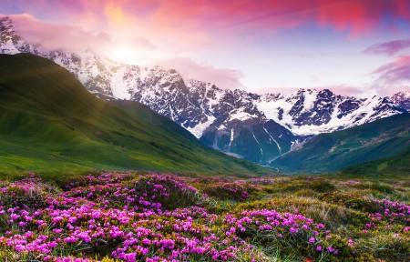 雪山开满鲜花的草地3440x1440风景高端电脑桌面壁纸