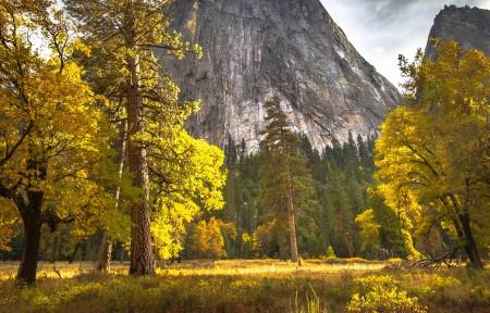 优胜美地国家公园秋天树林3440x1440风景超高清壁纸精选