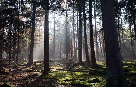 荷兰秋天的阳光穿过树林3440x1440风景高端电脑桌面壁纸