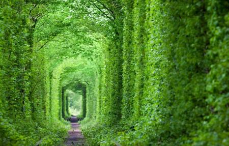 乌克兰 梦幻般的爱情隧道 绿树和铁路4k风景高端电脑桌面壁纸