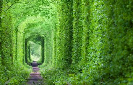 梦幻般的爱情隧道 绿树和铁路3440x1440风景高端电脑桌面壁纸
