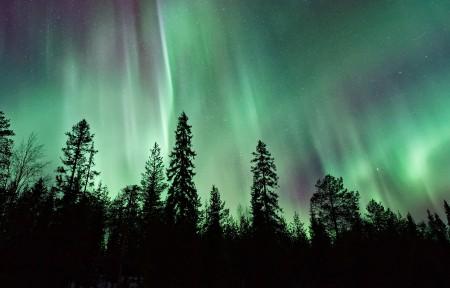 夜晚 天空 北极光 星星 树木高清风景3440x1440高端电脑桌面壁纸