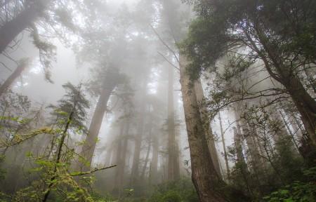 红杉树林3440x1440风景高端电脑桌面壁纸
