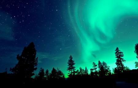 夜晚森林极光4k风景高端电脑桌面壁纸