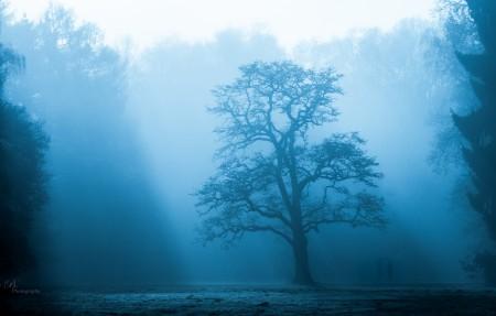 迷雾森林4K风景高端电脑桌面壁纸