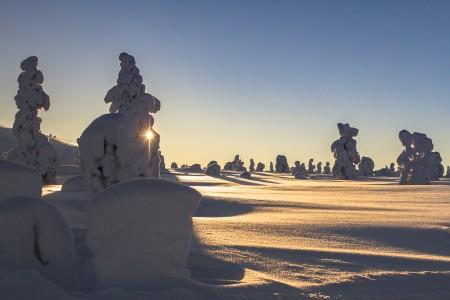 拉普兰,冬天,雪,芬兰,雪景,树木,太阳,4k风景高端电脑桌面壁纸