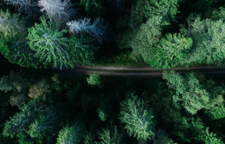 偏远的森林路俯瞰风景摄影3440x1440高端电脑桌面壁纸