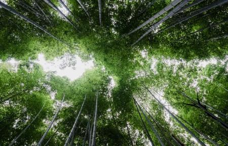 茂密竹林自然天空风景3440x1440高端电脑桌面壁纸