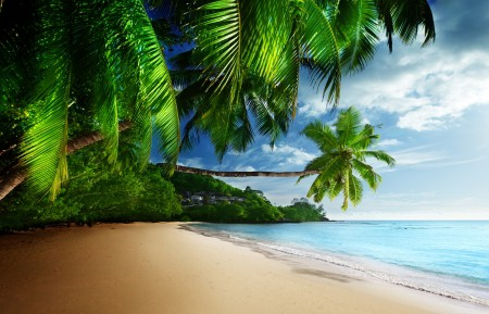 热带天堂,阳光,沙滩,海岸,海洋,天空,棕榈树,6K风景高端电脑桌面壁纸
