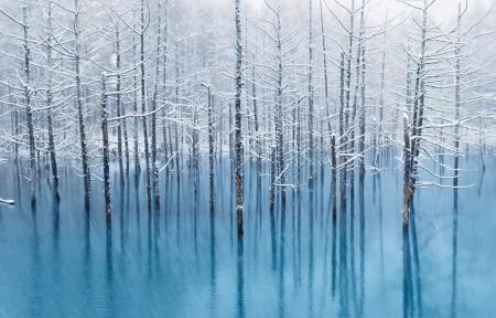 冬天树林风景3440x1440高端电脑桌面壁纸