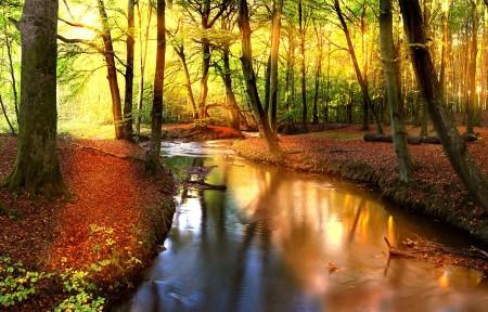 秋天,森林,小溪,河流,树木,阳光,大自然,3440x1440风景高端电脑桌面壁纸