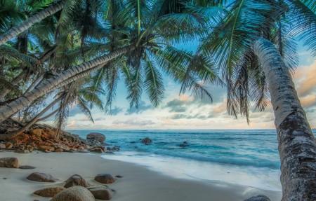 海边椰树沙滩HDR风光4K高清高端电脑桌面壁纸