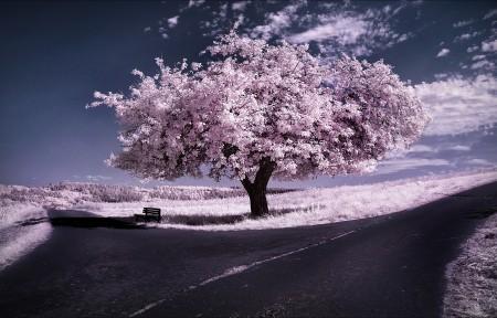 冬季风景,天空,树,道路,5K壁纸超高清图片下载