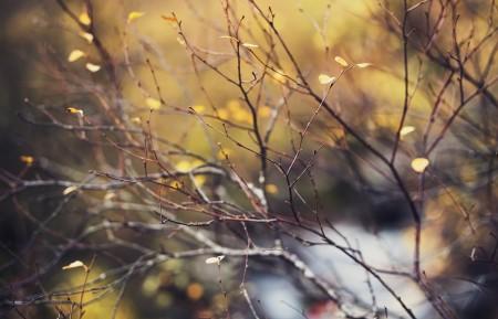 秋天的颜色树枝树叶4k风景高端电脑桌面壁纸