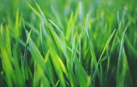 春天的草4k护眼高端电脑桌面壁纸