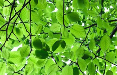 护眼绿色树叶3440x1440高端电脑桌面壁纸