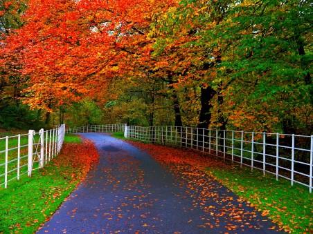 秋天,森林,公园,树木,叶子,栅栏,公路,自然风景4K高端电脑桌面壁纸