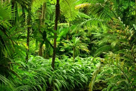 绿色森林,树木,热带,丛林,灌木丛,4K风景高端电脑桌面壁纸
