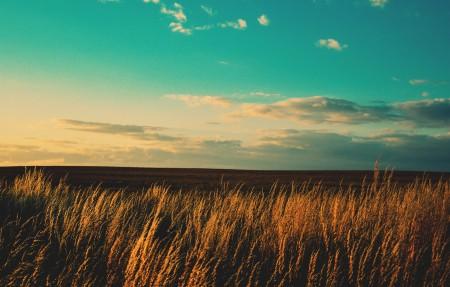 蓝天麦地4K风景高端电脑桌面壁纸