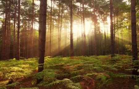 英国森林风景4K高端电脑桌面壁纸