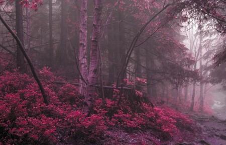 神秘红色树林风景3440x1440高端电脑桌面壁纸